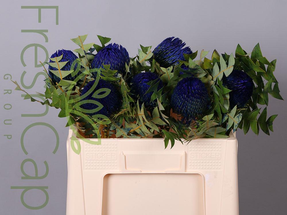Banksia Baxteri Blue