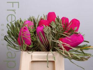 Banksia Hookeriana Pink grower, exporter & producer