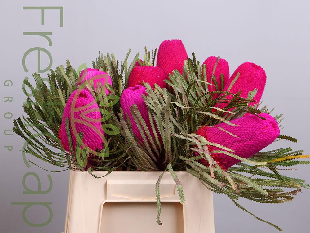 Banksia Hookeriana Pink