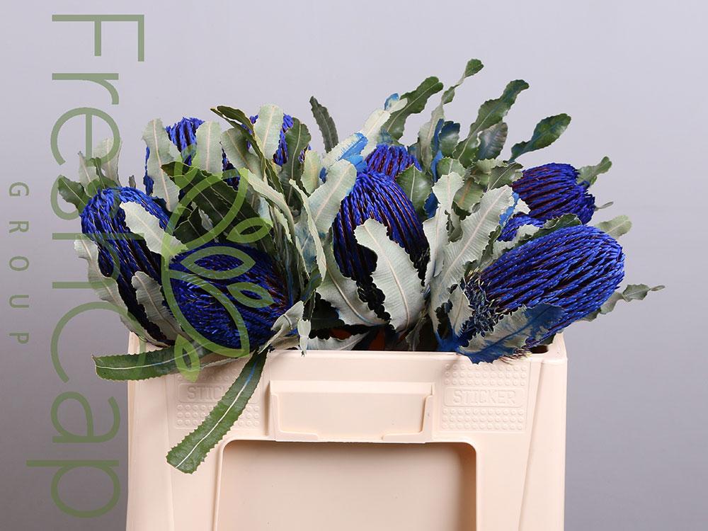Banksia Menziesii Blue