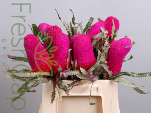 Banksia Prionotes Pink