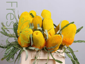 Banksia Prionotes Yellow