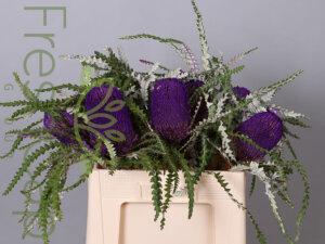 Banksia Speciosa Purple grower, exporter & producer