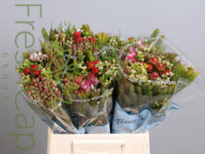 Bouquet Cape Mix grower, exporter & producer