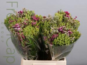 Bouquet Flori Mix grower, exporter & producer