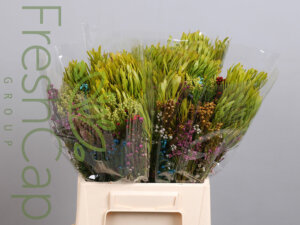 Bouquet Hunters growers, exporter & producers