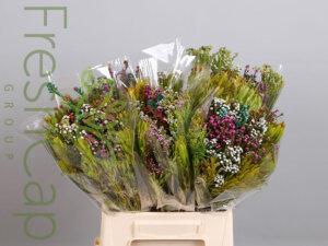 Bouquet Mountain Mix grower, exporter & producer