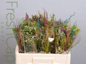 Bouquet Multi Mix grower, exporter & producer