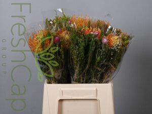 Pincushion Bouquet with one Pin grower, exporter & producer