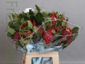 FreshCap Protea Waratah