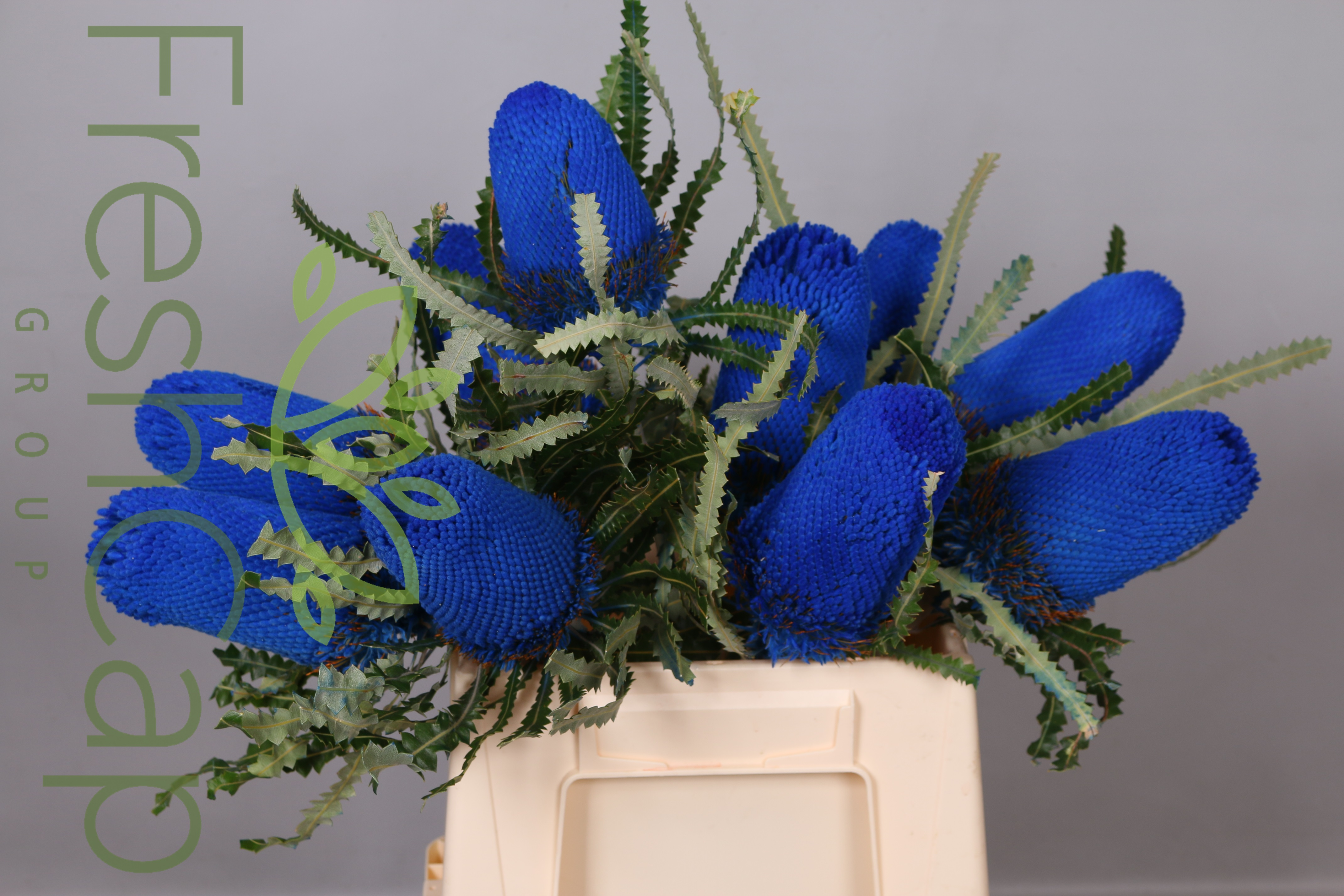 Banksia Prionotes Blue