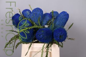 Banksia Speciosa Blue grower & producer
