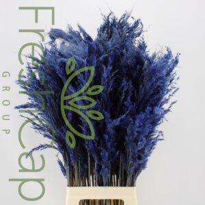 Pampas Grass Blue grower, exporter & producer