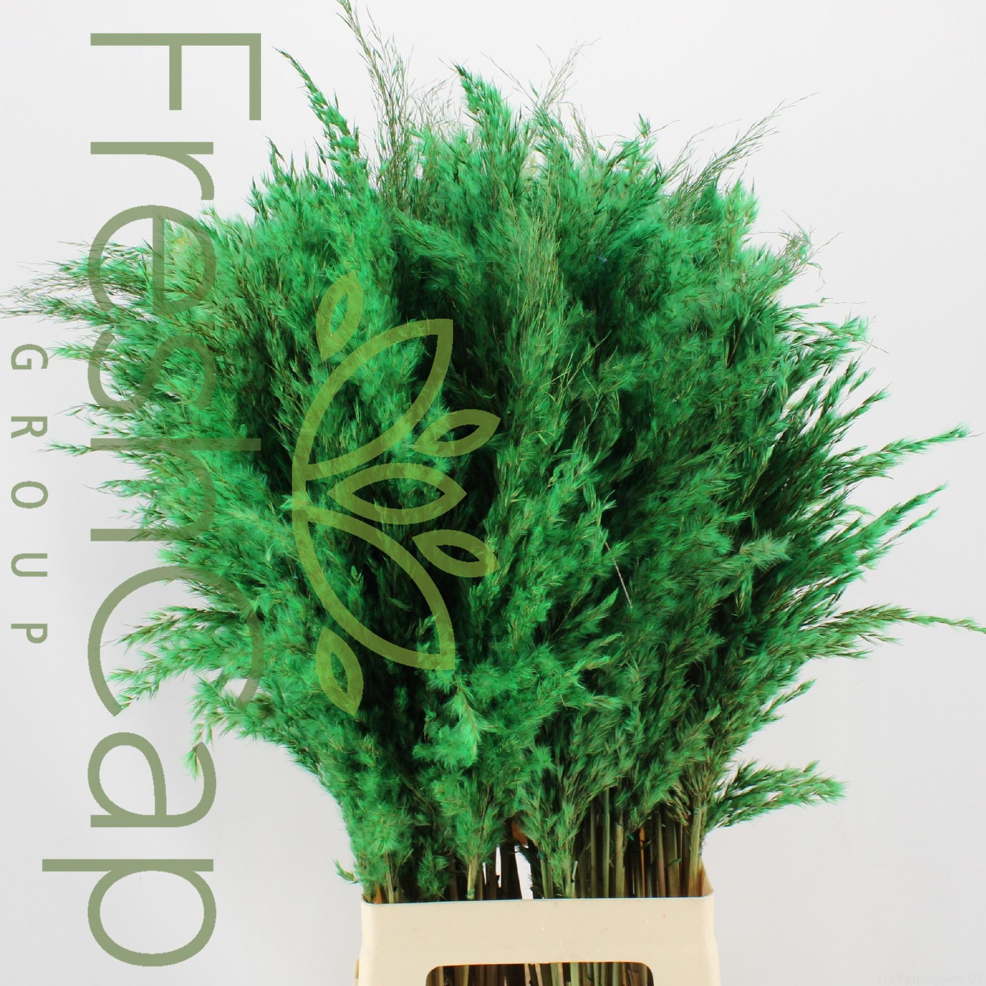 Pampas Grass Green