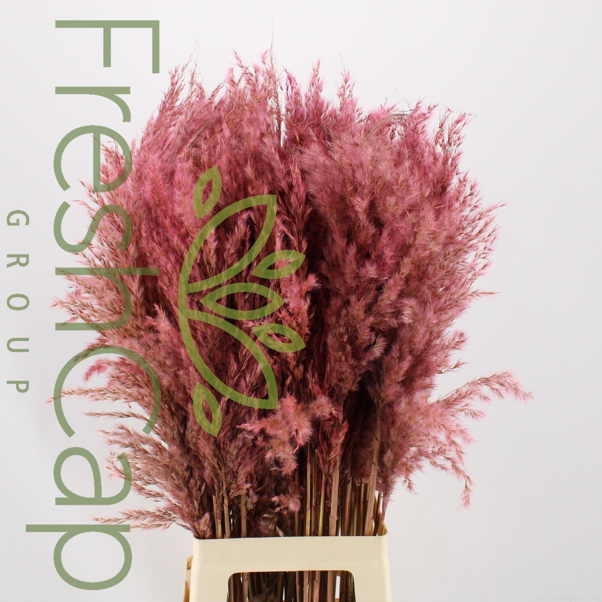 Pampas Grass Light Pink