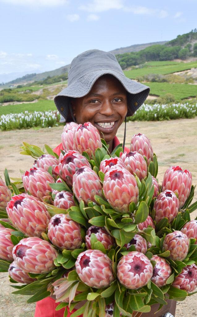 Protea Exporter