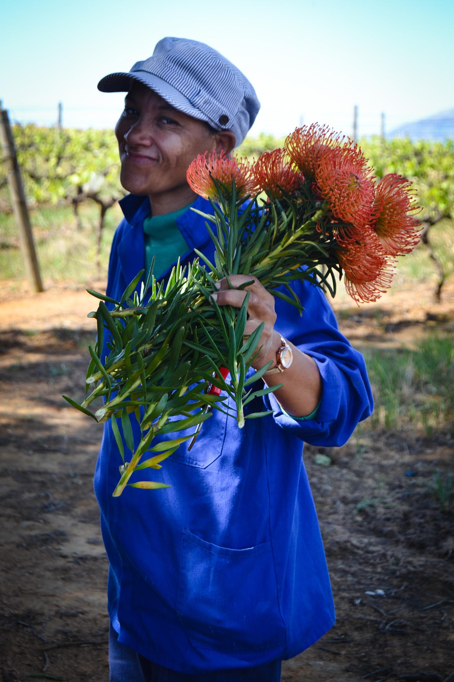 Leucospermum Grower Producer Exporter